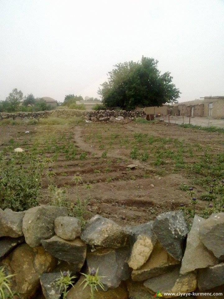11Arab-Shah-qamshilo