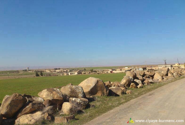 14Arab-Shah-qamshilo