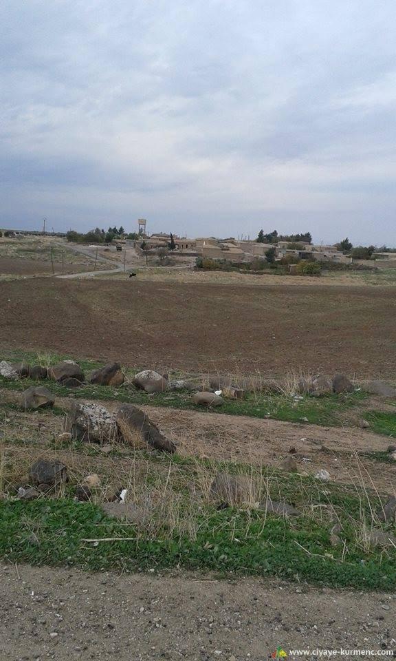 2Arab-Shah-qamshilo
