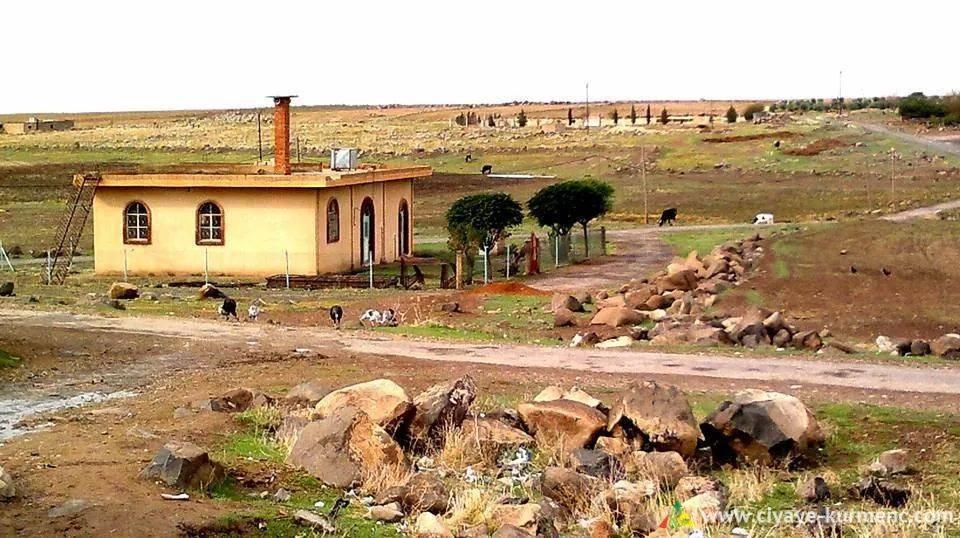 5Arab-Shah-qamshilo